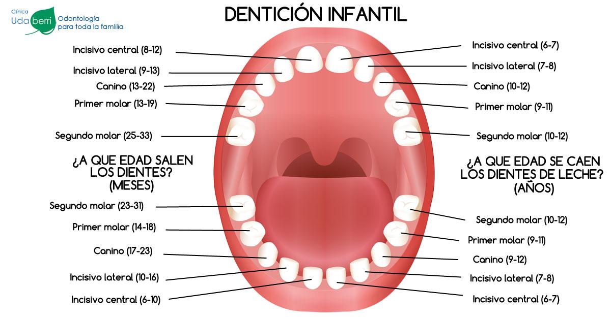 Calendario completo sobre dentición infantil